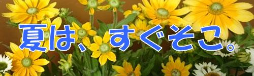 flower_summer